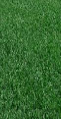 Lawn Service Fort Worth Weed Control Fertilizer Aeration